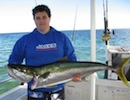 Moreton Island Fishing Charters Yellowtail Kingfish